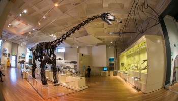 Visit Leicester's New Walk Museum & Art Gallery